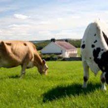 Уряд визначив напрямки підтримки фермерських господарств та кооперативів