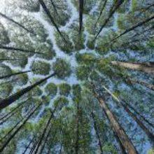 Володимир Зеленський підписав закон щодо проведення національної інвентаризації лісів