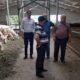 П'ять сільгосподарств Черкащини увійшли до племінної бази