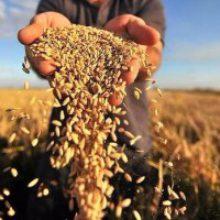 В області завершили збір ранніх зернових та зернобобових культур