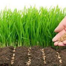 Збір зернових, технічних та посів озимих культур триває в області