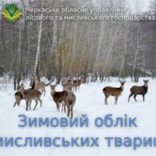 Розпочинається зимовий облік мисливських тварин у лісах Черкащини