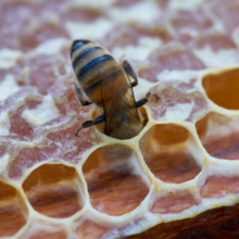 Бджолярі Черкащини торік отримали понад 12 млн грн держпідтримки