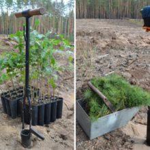 Цьогоріч лісівники Черкащини створять понад тисячу гектарів лісів