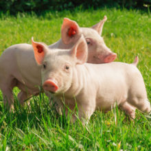 В обласному Департаменті АПР розповіли про втілення програм розвитку галузей тваринництва на Черкащині