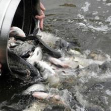Обласний Департамент АПР збирає пропозиції для покращення програми розвитку рибного господарства водойм