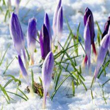 Вихідні дні та пам'ятні дати березня