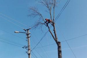 Своєчасна обрізка дерев біля ліній електропередачі – запорука безперервного електропостачання