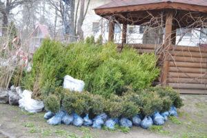 Лісівники Черкащини передали 400 саджанців дерев та кущів для озеленення Авдіївки