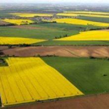 З 1 липня українці зможуть вільно розпоряджатися своєю землею, як це передбачено в Конституції