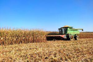 У Черкаському районі агрогосподарствами завершено збирання ранніх зернових та зернобобових культур
